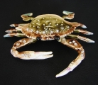 Bejeweled Crab